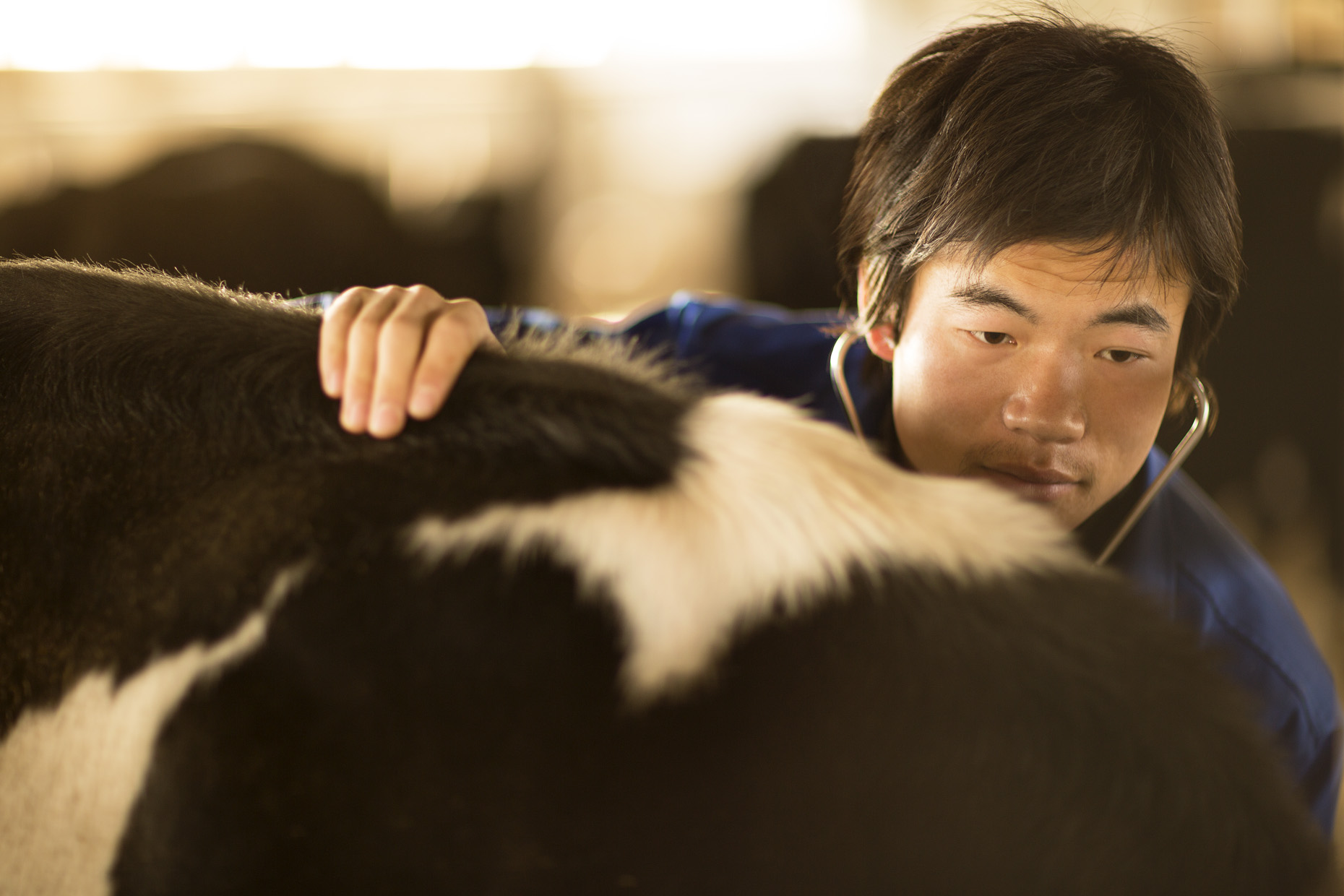 015_Hirez_China_Dairy_F6A6257