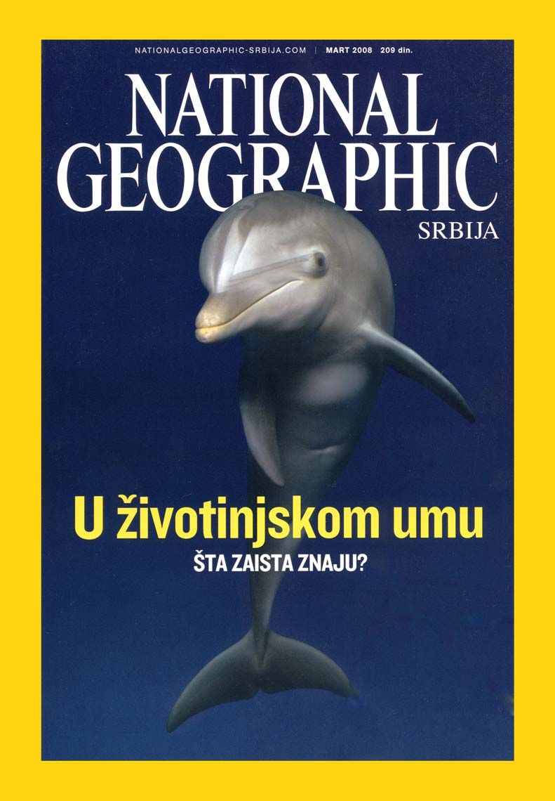 NGM_Dolphin_Cover
